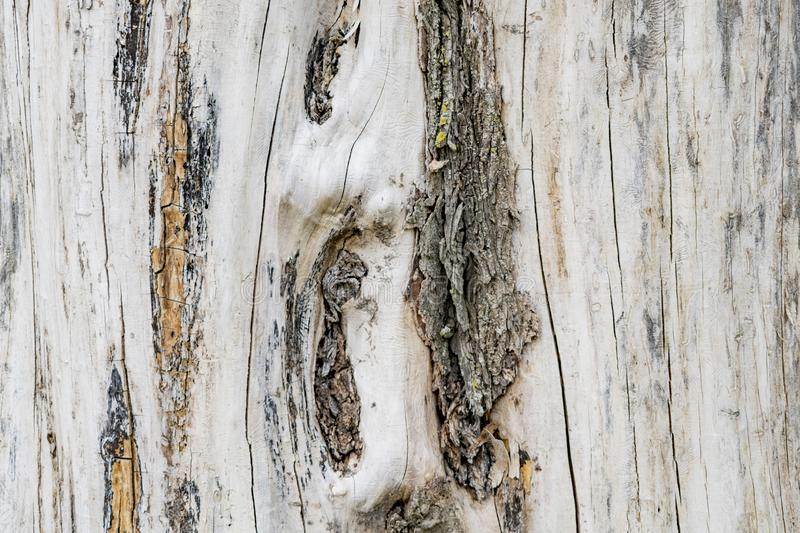 Texture image of an old wooden log. Destroyed by time royalty free stock photo