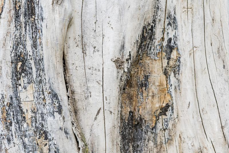 Texture image of an old wooden log. Destroyed by time stock image