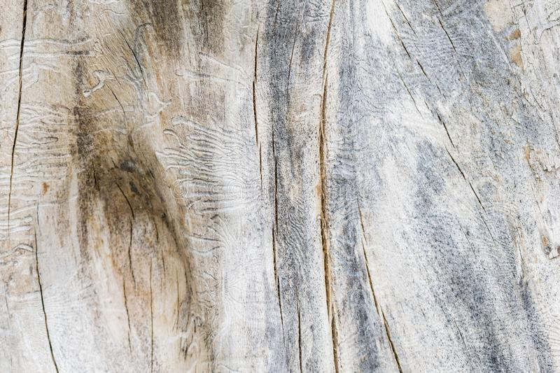 Texture image of an old wooden log. Destroyed by time royalty free stock photos