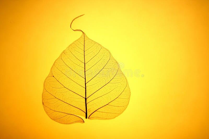 Texture jaune de lame photo libre de droits