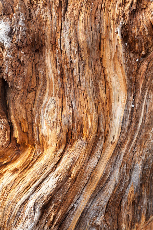 The texture of the large dry wood. royalty free stock photo