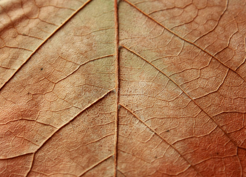 Texture of leaf stock photo