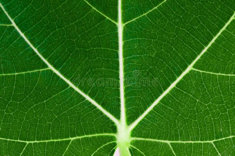 Texture of the leaf stock photo