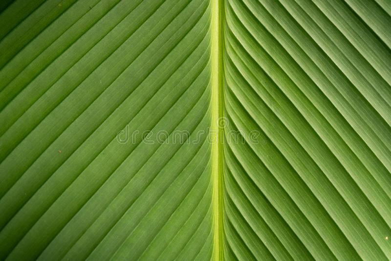 Texture on leaf stock images