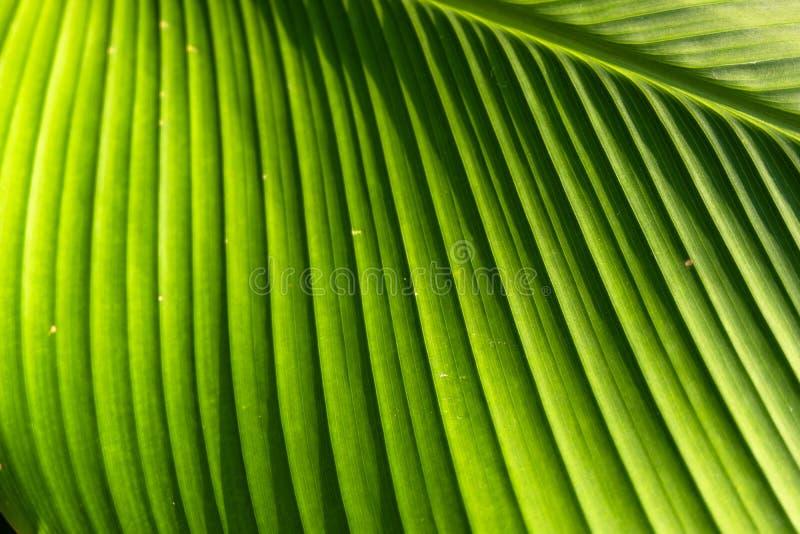 Texture on leaf stock photo