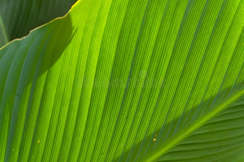 Texture on leaf royalty free stock photo