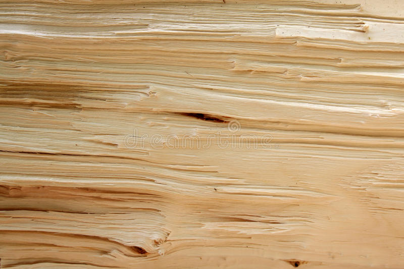 Texture of lengthwise break of tree stock images