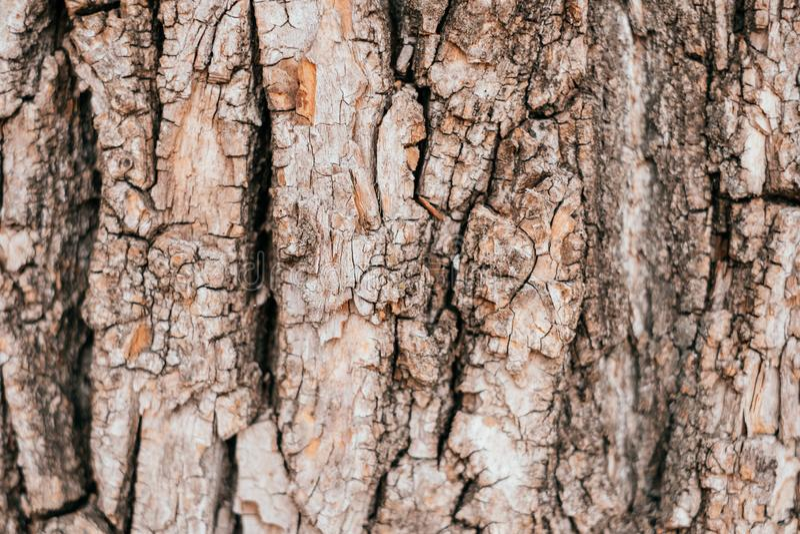 Tree bark background stock photography