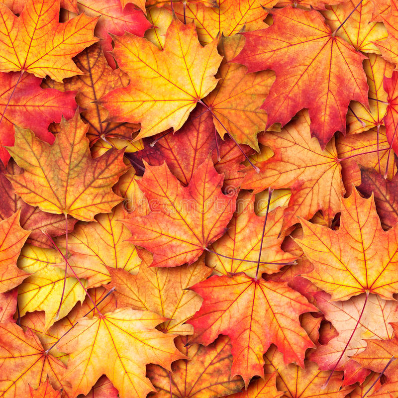 Texture with maple leaves stock image
