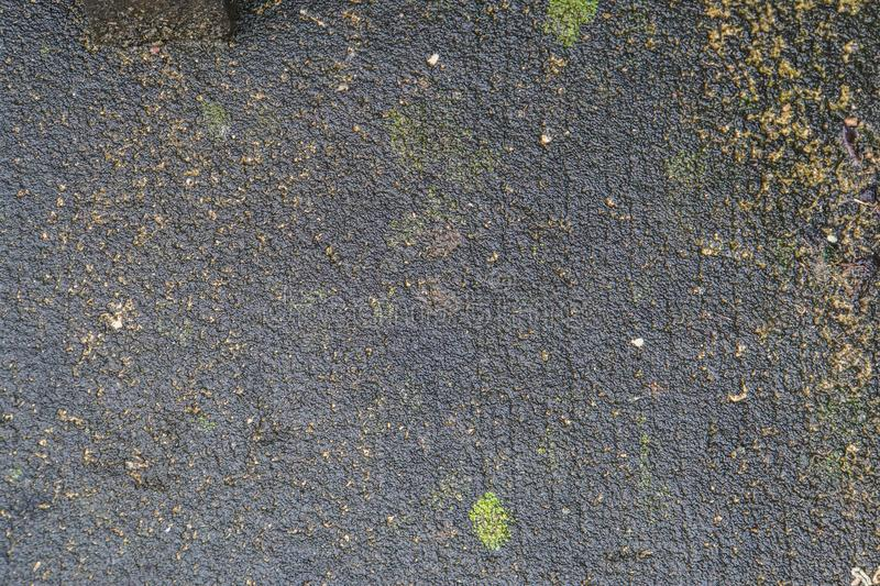 Moss on concrete floor in rainy season royalty free stock photography