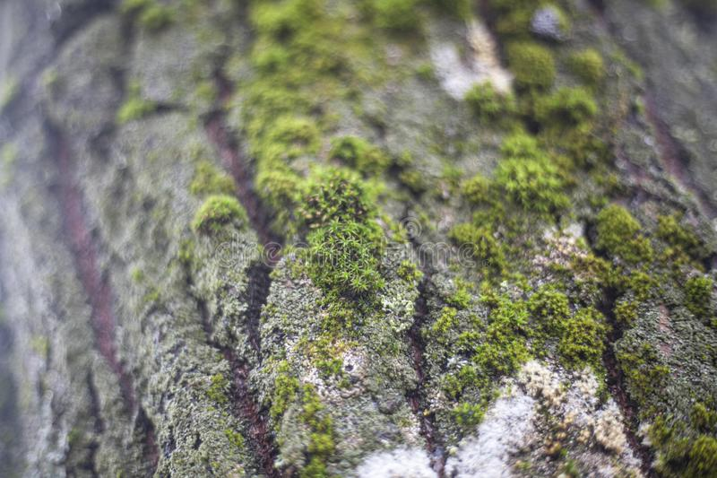 The Texture Of The Moss On The Tree The Combination Of Green In
