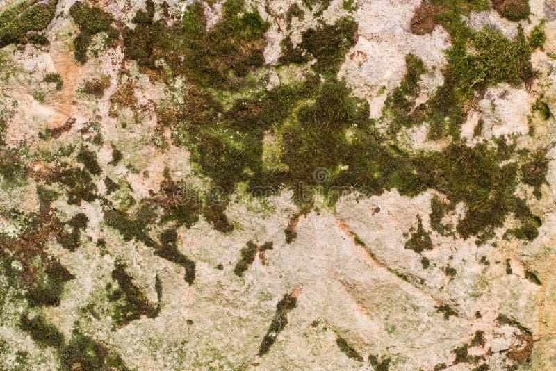 Texture moussue et grenue de fond de grès photo stock