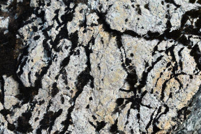Texture moussue sur une roche image libre de droits