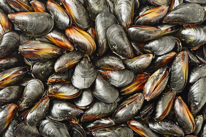 Mussel. Texture from mussel on beach , see product stock photos