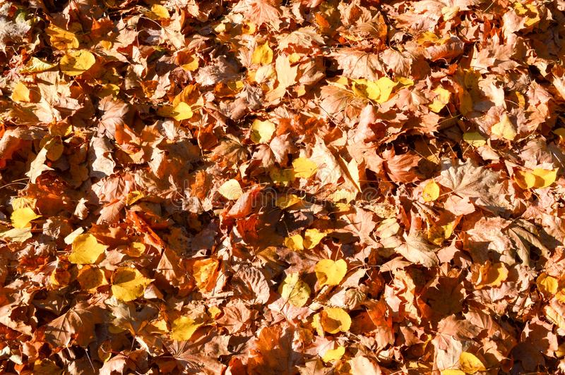 Texture, natural carpet of dry fallen autumn natural yellow orange red leaves. The background royalty free stock photography