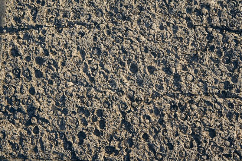 Texture of natural stone originated in sea, with prints of mollusks and shells. View on sunset royalty free stock photo