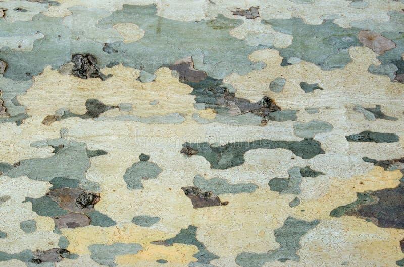 Texture naturelle d'écorce d'un arbre La surface de l'écorce d'arbre avec des taches de diverses couleurs et formes image libre de droits
