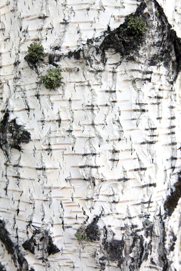 Texture naturelle d'eco photo stock