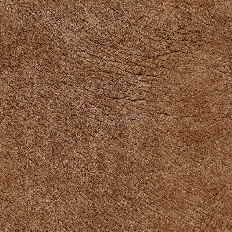 Texture naturelle sans couture de peau d'éléphant images stock