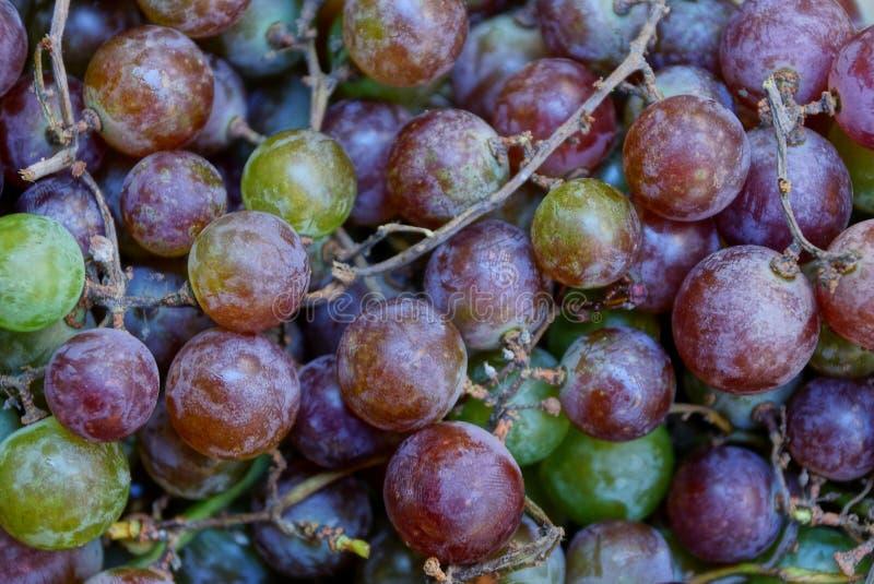 Texture naturelle végétale de couleur des raisins ronds photographie stock