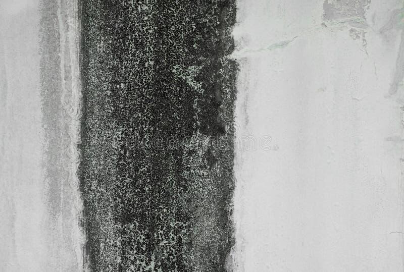 Texture noire naturelle de moule ou d'algues sur le fond de mur de ciment blanc, l'espace de copie images libres de droits