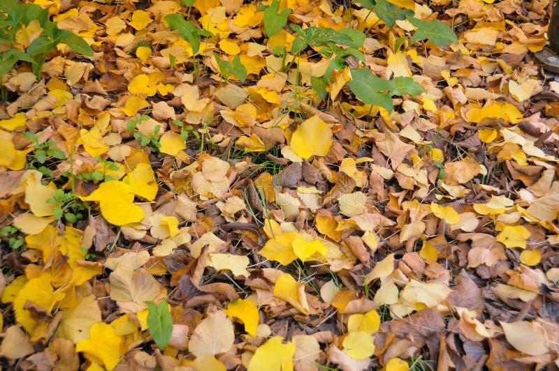 Texture normale d'automne image libre de droits