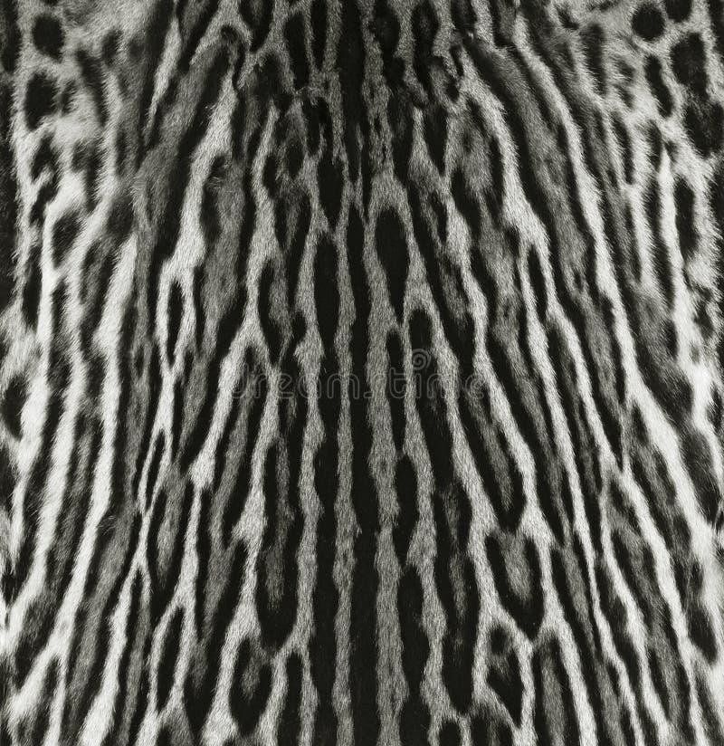 Download Ocelot fur texture stock photo. Image of pattern, jaguar - 30123220