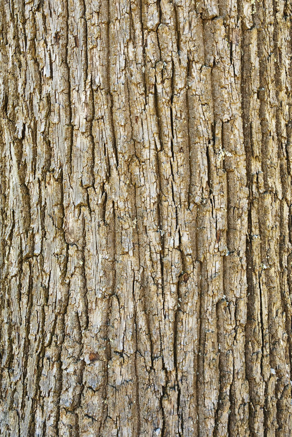 Free Texture Of Tree Bark Stock Photos - 12188103