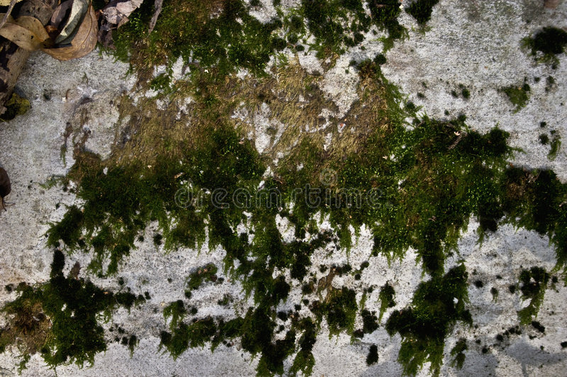 Texture of an old concrete wall. With a moss stock photography