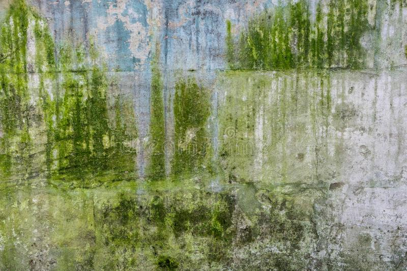 Texture of old concrete wall covered with green moss. Closeup royalty free stock images