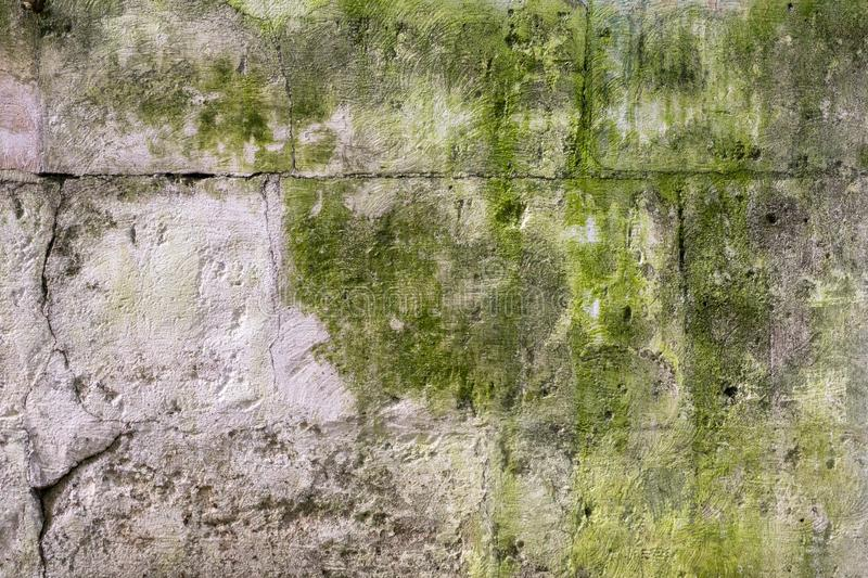 Texture of old concrete wall covered with green moss. Closeup royalty free stock image