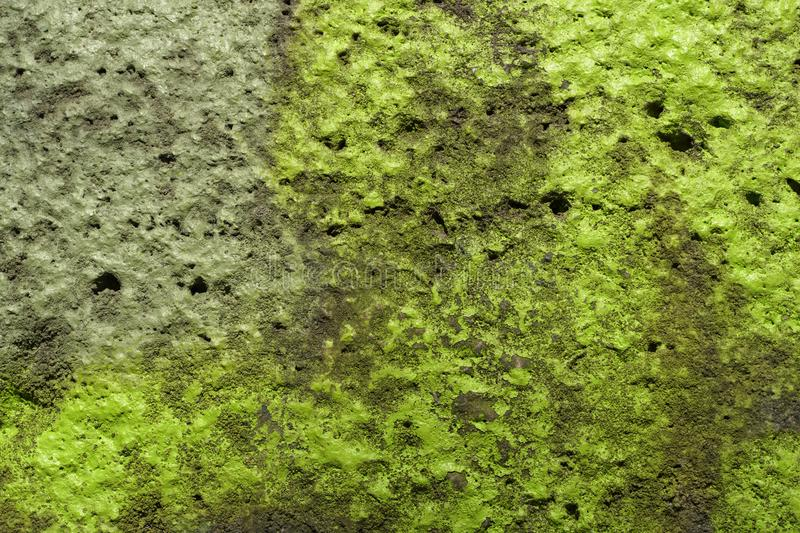 Texture of an old concrete wall. With green mould stock photography