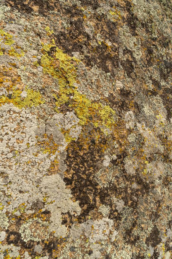 Texture of old granite covered with moss. Creative vintage background royalty free stock image