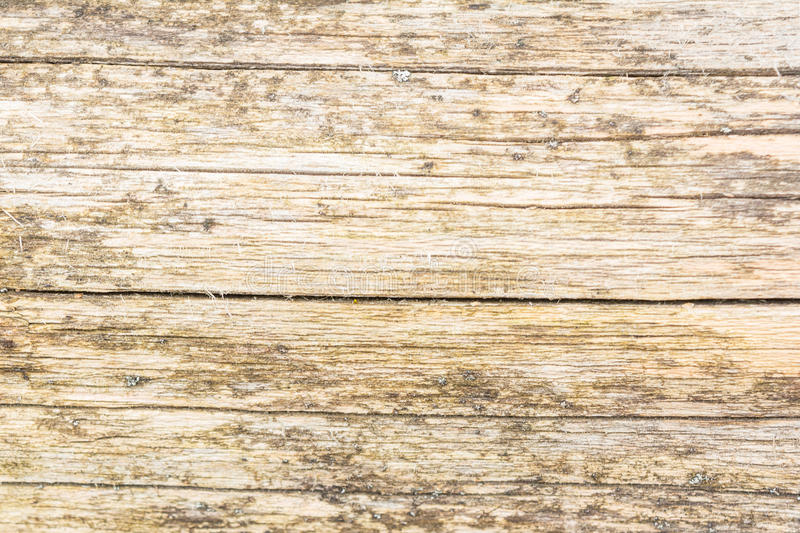 The texture of the old natural wood, the log of the poplar is damaged by large cracks, has a non-uniform color royalty free stock image
