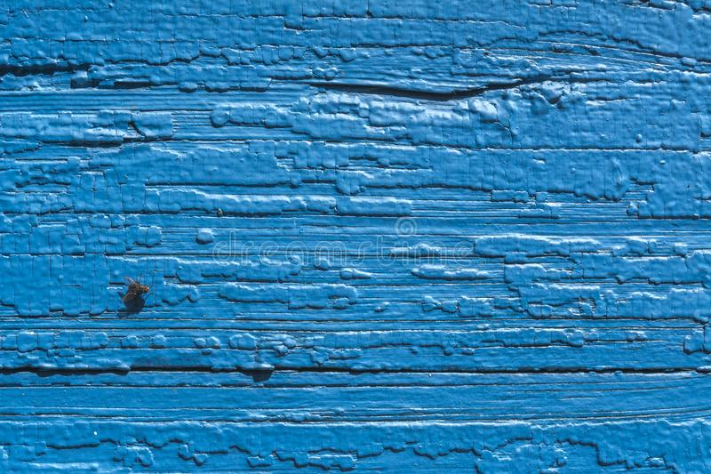 Texture. Old painted wall of the house. Old wooden fence. Blue paint. Fly on Board. stock photography
