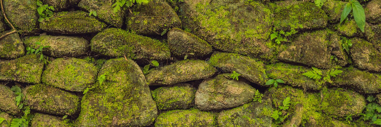 Texture of old stone wall covered green moss in Fort Rotterdam, Makassar - Indonesia BANNER, long format. Texture of old stone wall covered green moss in Fort royalty free stock photography