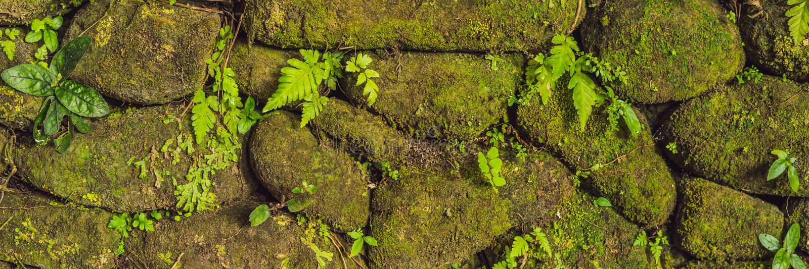 Texture of old stone wall covered green moss in Fort Rotterdam, Makassar - Indonesia BANNER, long format. Texture of old stone wall covered green moss in Fort stock photo