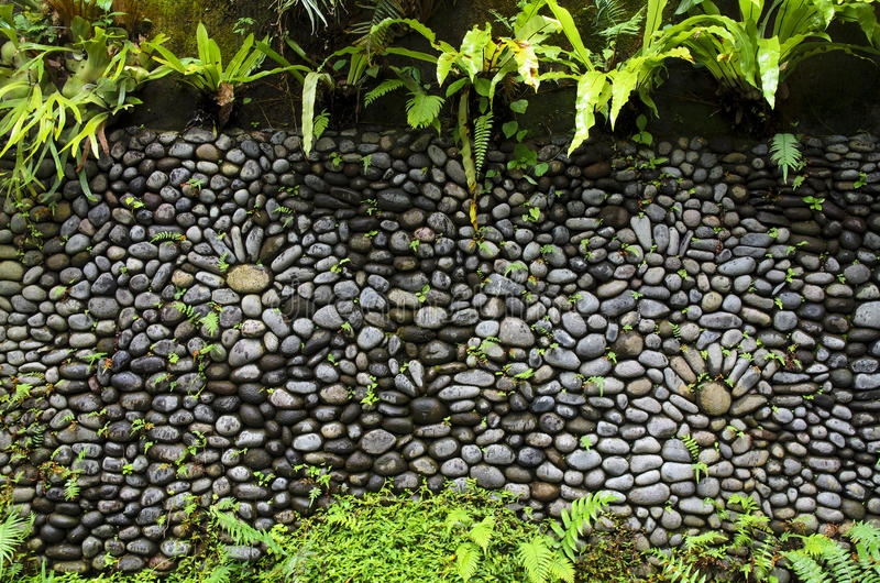 Texture of old stone wall covered green moss in Indonesia stock photo