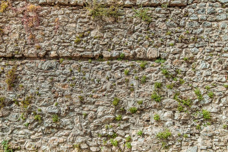 Texture of old stone wall with small plant. Surface from grey and orange rocks. Ancient wall in Macedonia royalty free stock photos