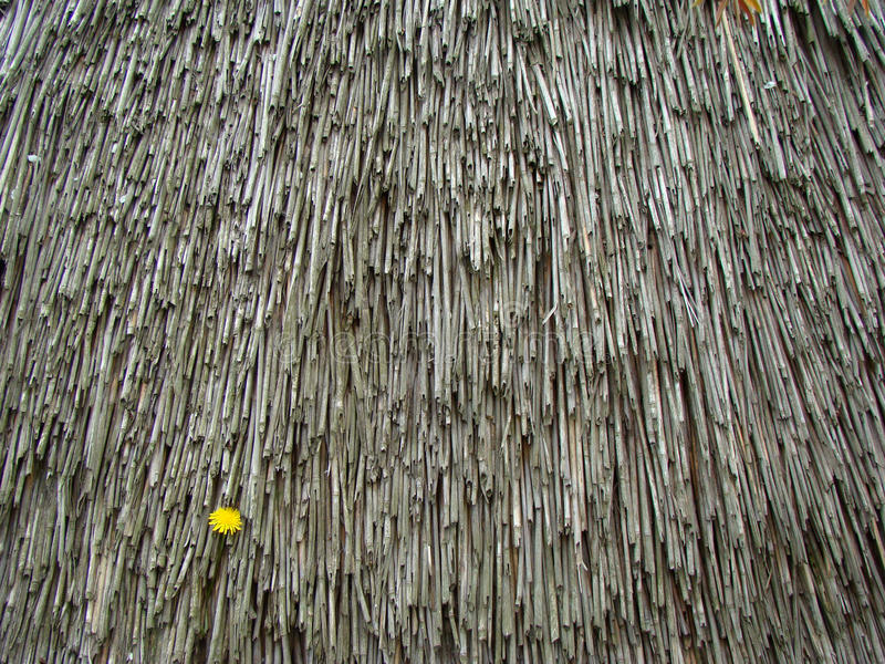 Texture old thatch roof. Old dried thatch roof, texture stock photos