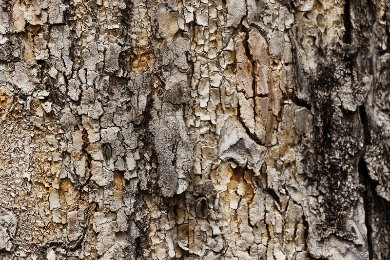 Texture of old tree in the foreground with cracks and details. Seems burn or damage royalty free stock image
