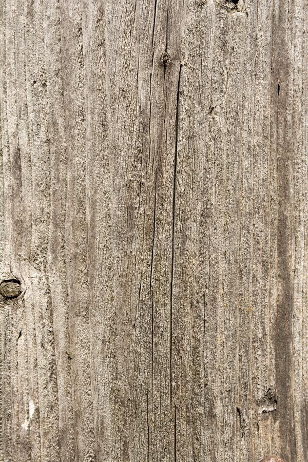 Texture of the old tree with longitudinal cracks, surface of ancient weathered wood, abstract background royalty free stock photography