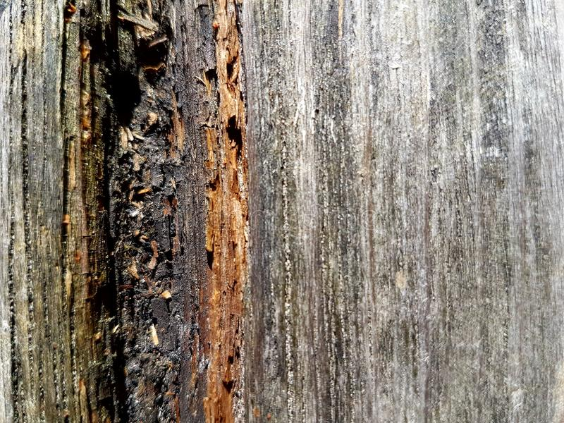 Texture of old weathered wood royalty free stock photography