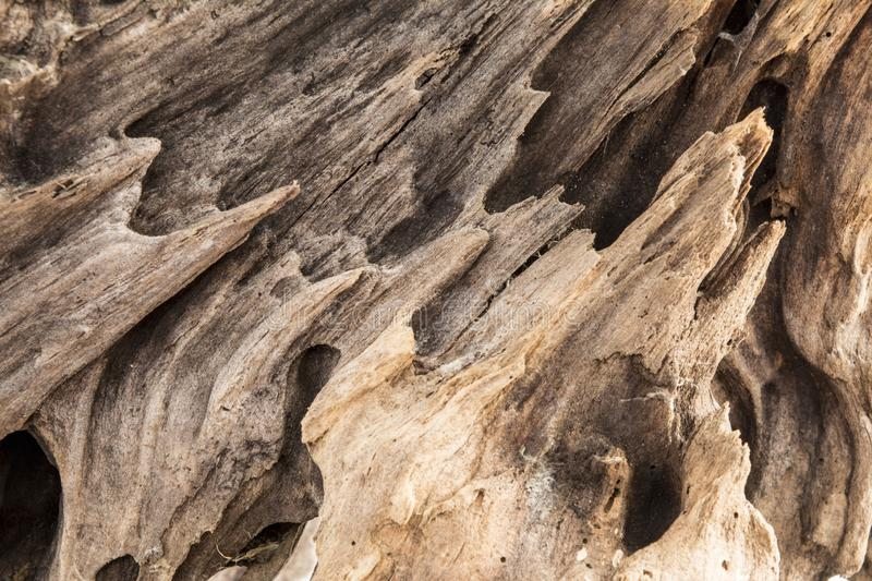 Texture of old weathered wood, dry snag of a coniferous tree, close up art abstract background stock image