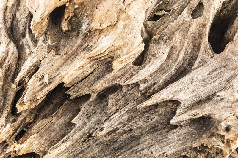 Texture of old weathered wood, dry snag of a coniferous tree, close up art abstract background stock photo