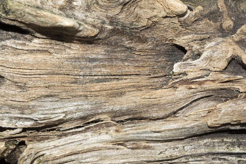 Texture of old weathered wood, dry snag of a coniferous tree, close up art abstract background royalty free stock photos