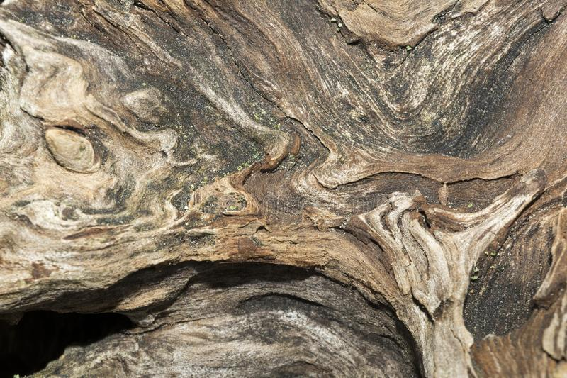 Texture of old weathered wood, dry snag of a coniferous tree, close up art abstract background stock photography