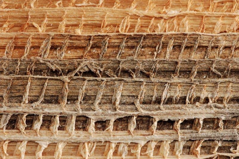 Texture organique photos stock