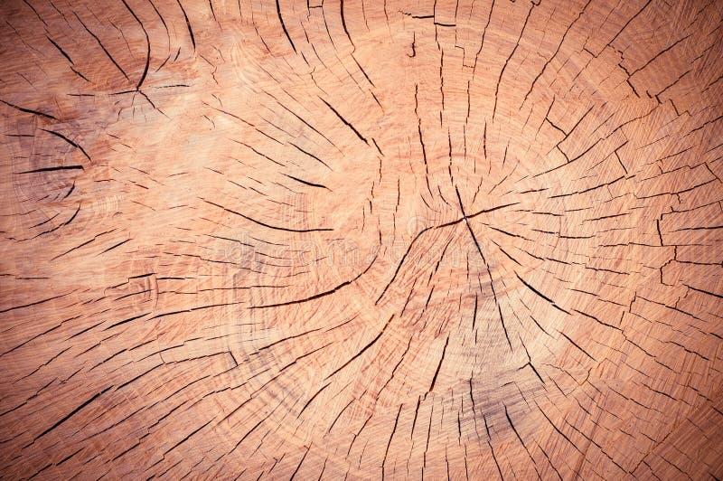 Texture organique de fond de remous en bois image libre de droits