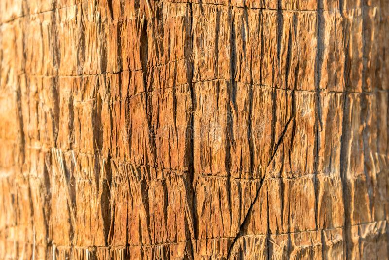 Texture of palm bark macro. Palm tree large trunk detailed structure background and texture of bark. Palm trunk and bark close-up royalty free stock photography